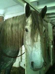 horses-burn-0056